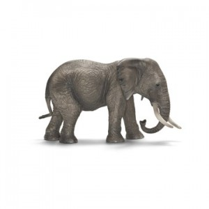 AFRIKAANSE OLIFANT, VROUWTJE