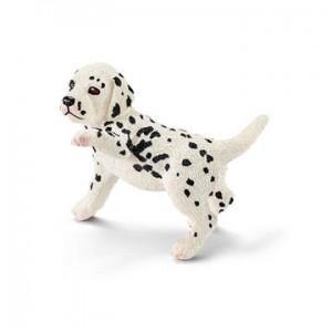 Dalmatiër Pup